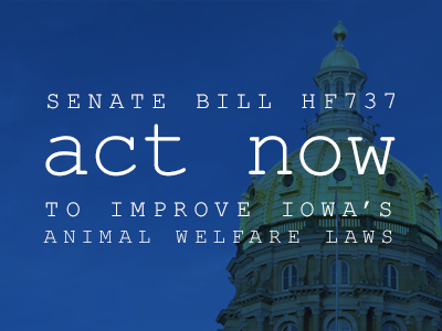 Senate Bill HF737: Must Pass Without Amendment