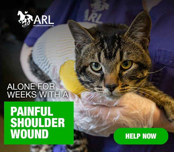 Cat alone for weeks with a painful shoulder injury