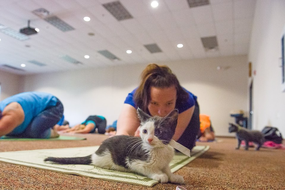 Cats N Mats Yoga At Element West Des Moines Animal Rescue League