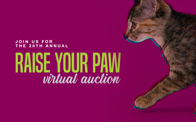 Raise Your Paw Auction
