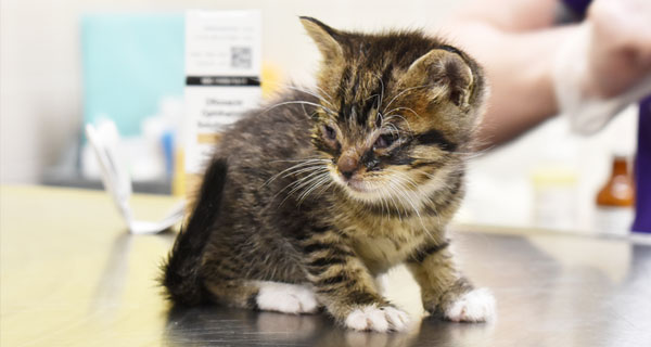 20 Kittens and Cats Need Your Help Now