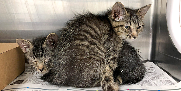 26 Cats Rescued in Des Moines, ARL