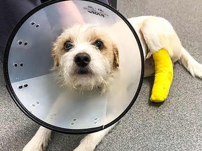 Elliot needs surgery now to save his leg