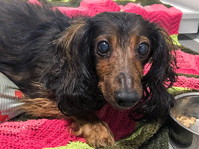 Senior dog found grieving and in pain