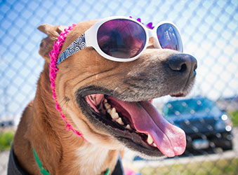 Summer Heat Safety Tips for Pets