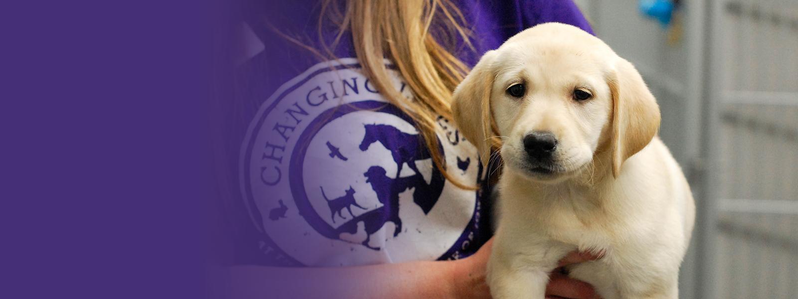 Animal Rescue League Of Iowa Inc