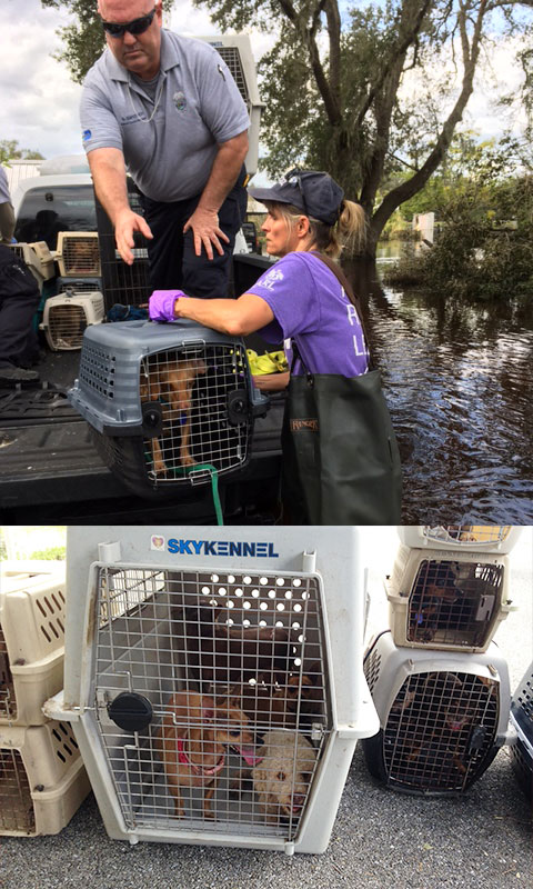ARL Rescues 60 Animals from Flooded House