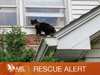 ARL Iowa Removes Hundreds of Cats From Central Iowa Property
