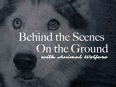Behind the Scenes and On the Ground with Animal Welfare