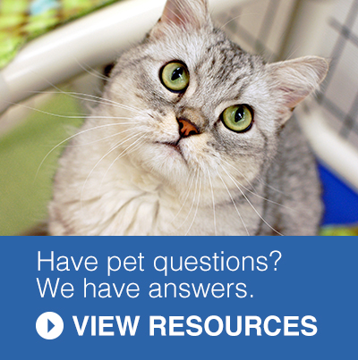 Pet Resources