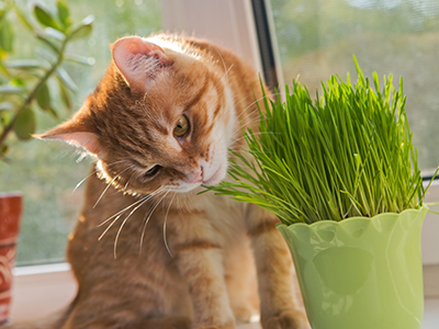 Plants and your cat