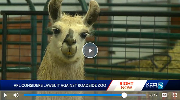 Cricket Hollow Zoo, KCCI-8