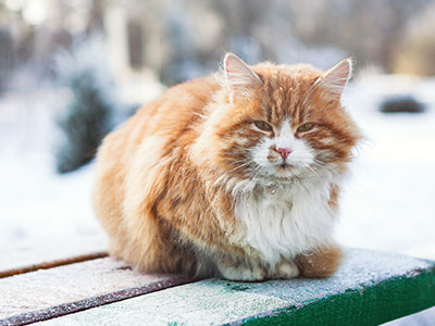 Keep Feral Cats Warm in the Winter