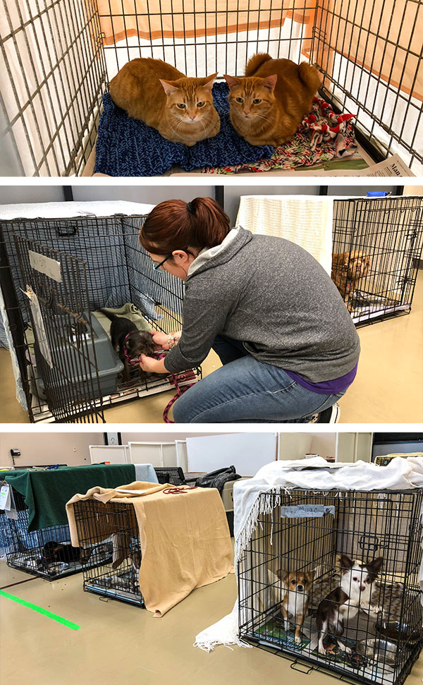 Crisis Foster Pets Seek Shelter at the ARL due to Flooding