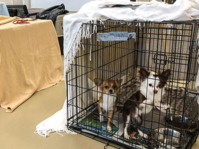 Flooding Leaves Nearly 50 Pets in Crisis Foster at the ARL