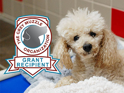 Senior Dogs at the ARL Fetch Grant