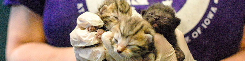 Kitten Season Animal Rescue League Of Iowa