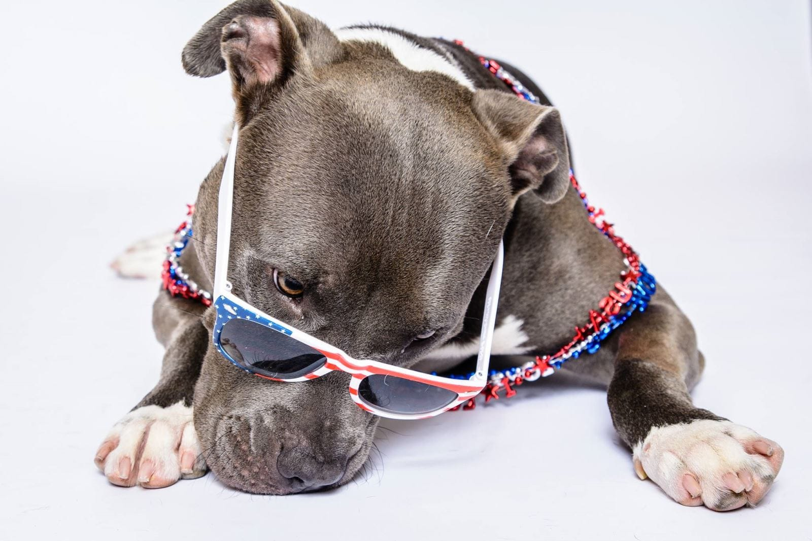 4th of July dog