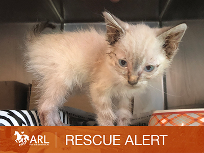 ARL Rescues Dozens of Cats from 4th Hoarding Case in 10 Weeks
