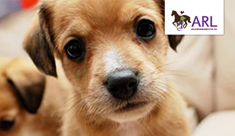 Foster Animal Rescue League Of Iowa