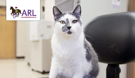 Pet Friendly Businesses | Animal Rescue League of Iowa