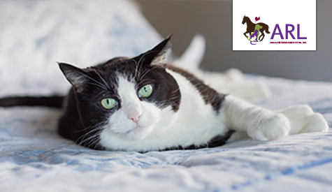 Pet Friendly Housing | Animal Rescue League of Iowa