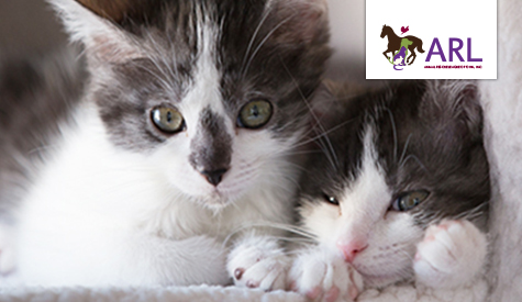 Spay Neuter Animal Rescue League Of Iowa
