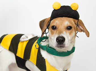 Tips For A Pet-Friendly Halloween