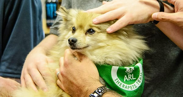 What is a Therapy Animal?