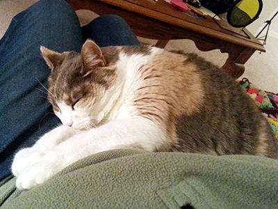 This cuddly gal Kibbey found her forever human through our Meet Your Match  program, our free match-making service for cats! Kibbey's adopter gave us  an idea ...
