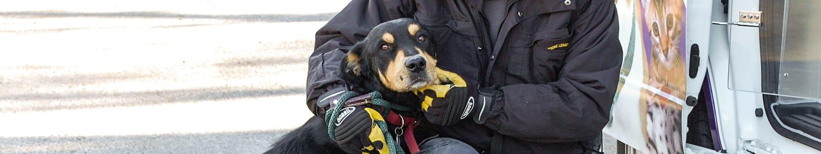 Animal Control | Animal Rescue League of Iowa