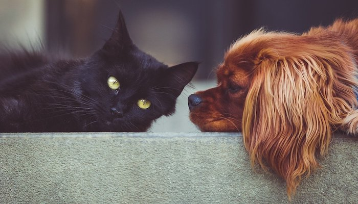 cat dog pett friends