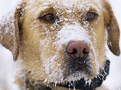 Cold-Weather Tips for Pets