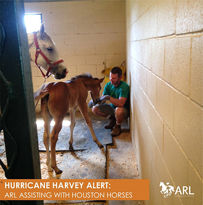 ARL Hurricane Harvey Update