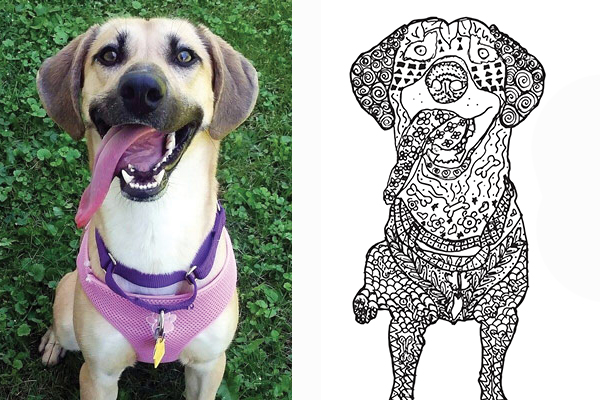 The Animal Rescue League Is Partnering With Scavo High School Des Moines Art Students For A Second Coloring Book This Time YOU Can Submit Photo Of