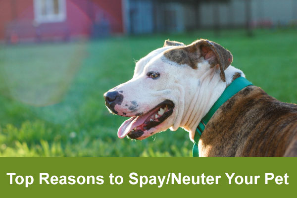 top reasons to spay/neuter